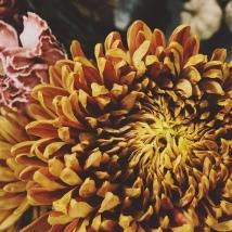 Flowering In Patience